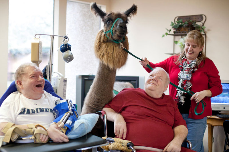 therapy llamas bring smiles to sick and elderly jen osborne colors magazine 4 This Photographer Does Photo Booths for Dogs to Increase Adoption and Its Working