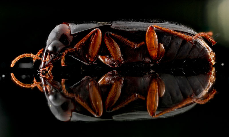 detailed macro close ups of arthropods by usgs (11)