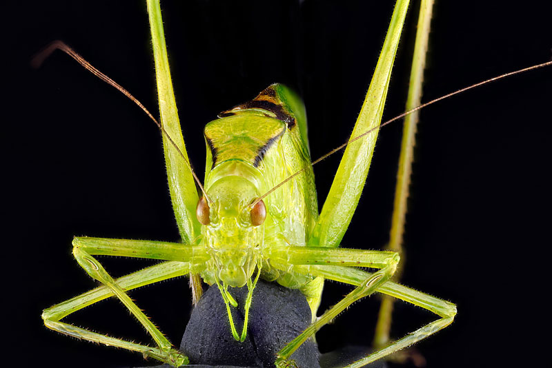 detailed macro close ups of arthropods by usgs (14)