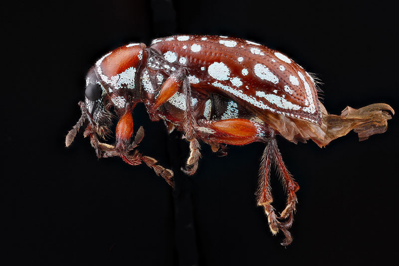 detailed macro close ups of arthropods by usgs (18)