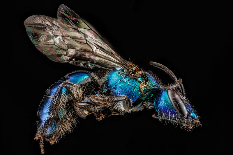 detailed macro close ups of arthropods by usgs (19)