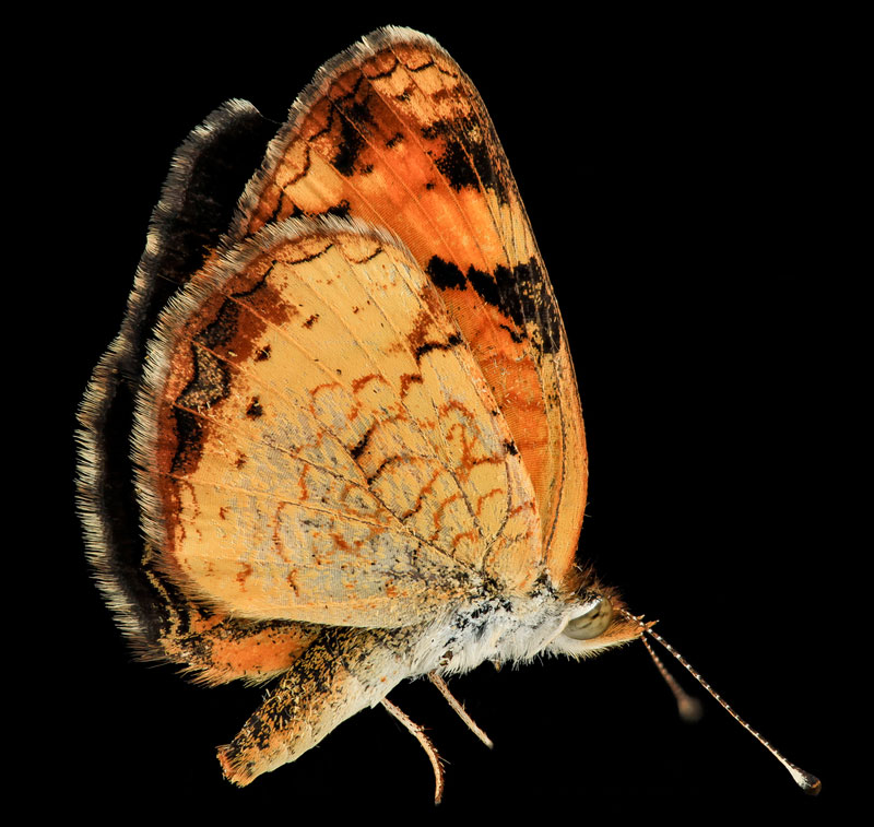 detailed macro close ups of arthropods by usgs (2)