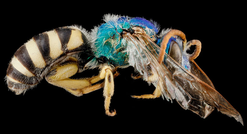 the 40 most detailed close ups of arthropods you will see today