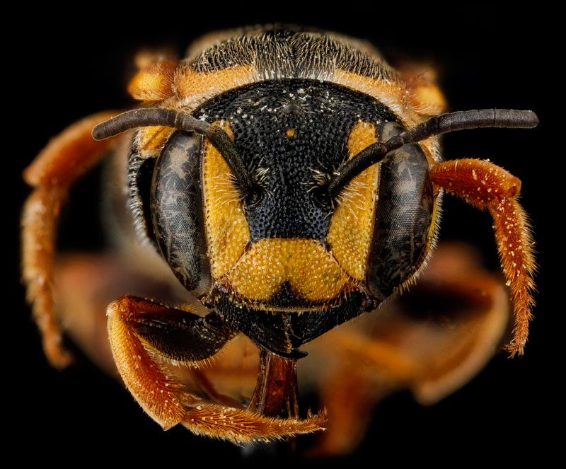 detailed macro close ups of arthropods by usgs (21)