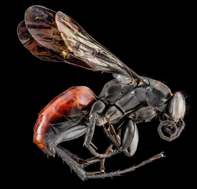 detailed macro close ups of arthropods by usgs (24)