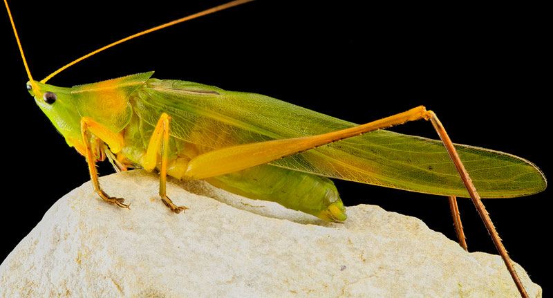 detailed macro close ups of arthropods by usgs (30)