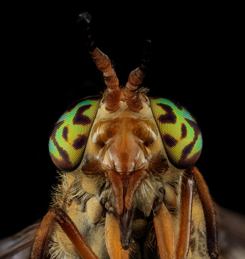 detailed macro close ups of arthropods by usgs (35)