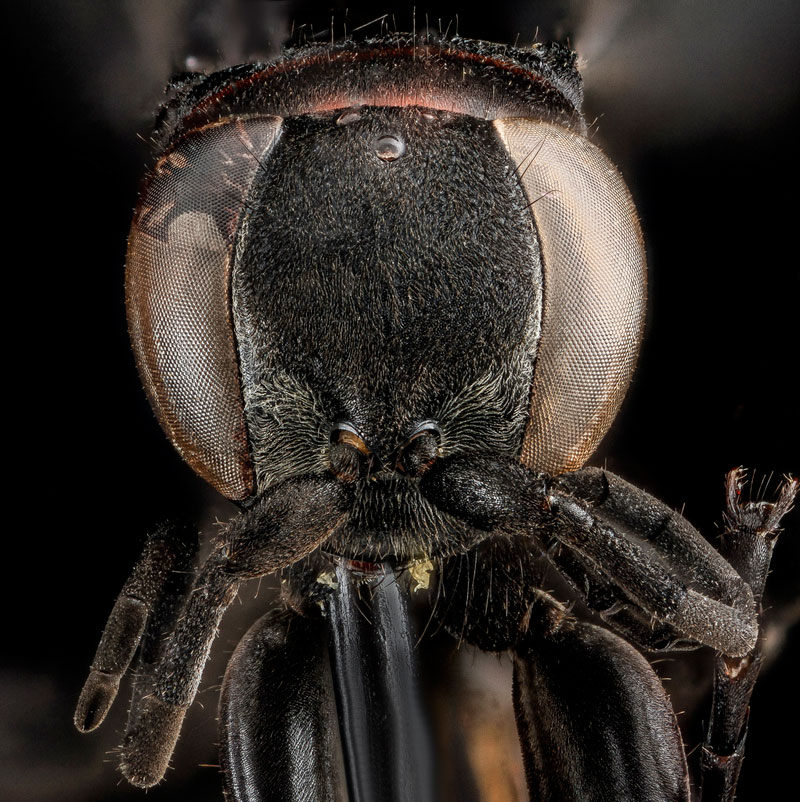 detailed macro close ups of arthropods by usgs (39)