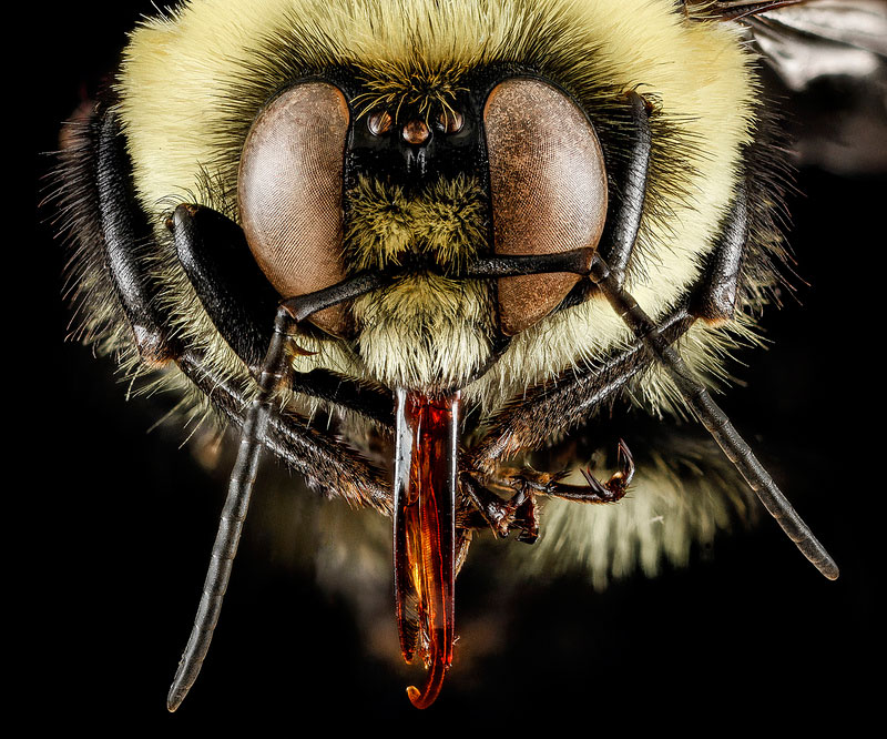 detailed-macro-close-ups-of-arthropods-by-usgs-(41)