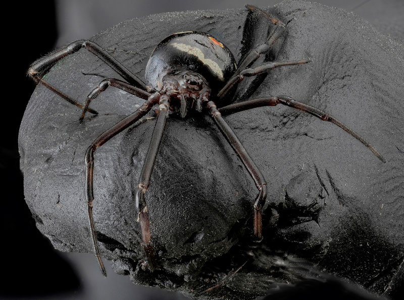 detailed macro close ups of arthropods by usgs (8)