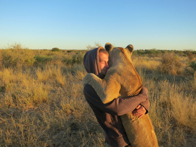 lion whisperers modisa botswana by nicolai frederk bonnen rossen 3 The Story of Leo, Baloo and Shere Khan: The Inseparable Bond Between a Bear, Lion and Tiger