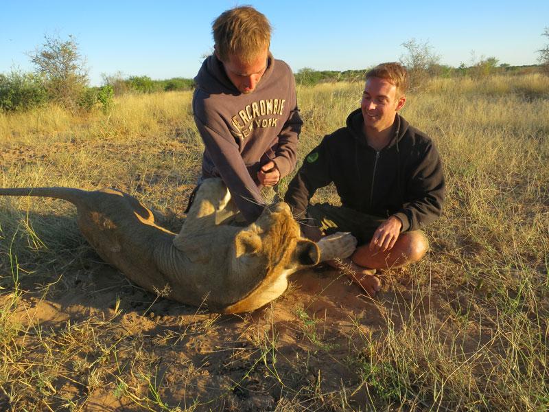 lion whisperers modisa botswana by nicolai frederk bonnen rossen (7)