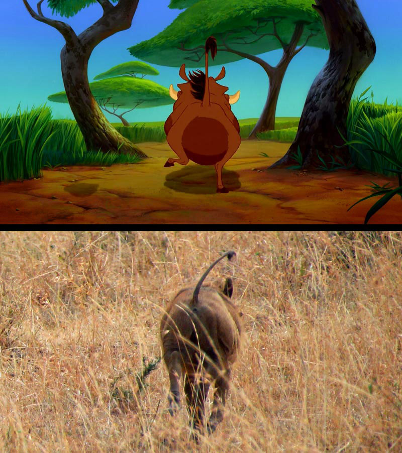 Recreating Scenes from the Lion King While on an Actual Safari