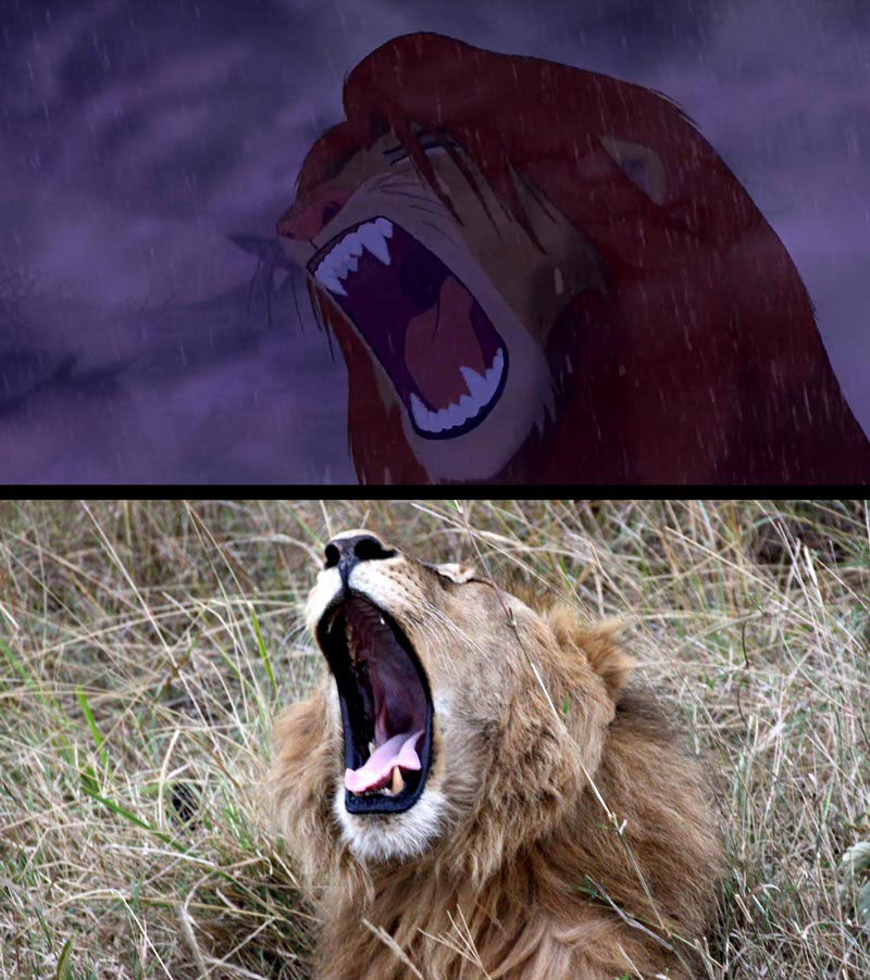 real life lion king brandon heuser (18)