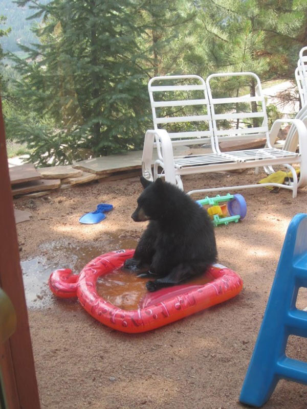 sad bear in wading pool The Shirk Report   Volume 231