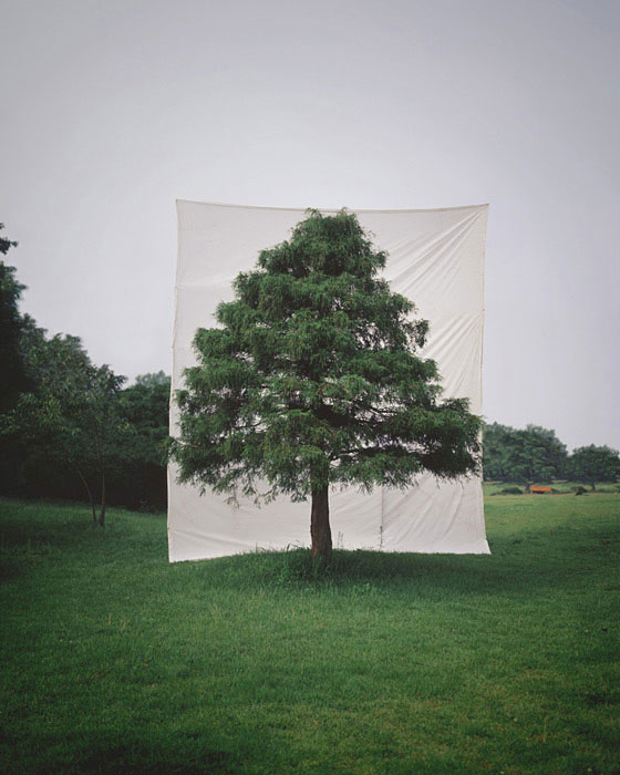 white canvas backdrops behind trees myoung ho lee (2)