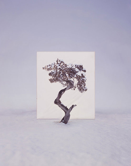 white canvas backdrops behind trees myoung ho lee (4)