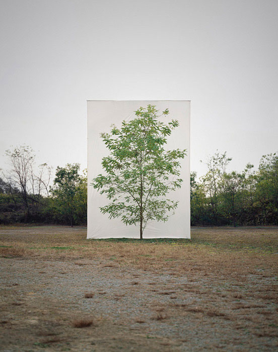 white canvas backdrops behind trees myoung ho lee (5)