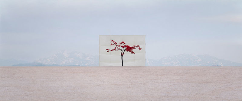 white canvas backdrops behind trees myoung ho lee (6)