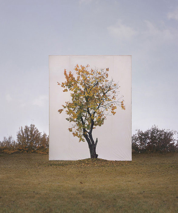 Canvas Backdrops Turn Actual Trees Into 2DArtworks
