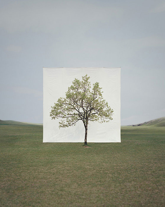 white canvas backdrops behind trees myoung ho lee (9)