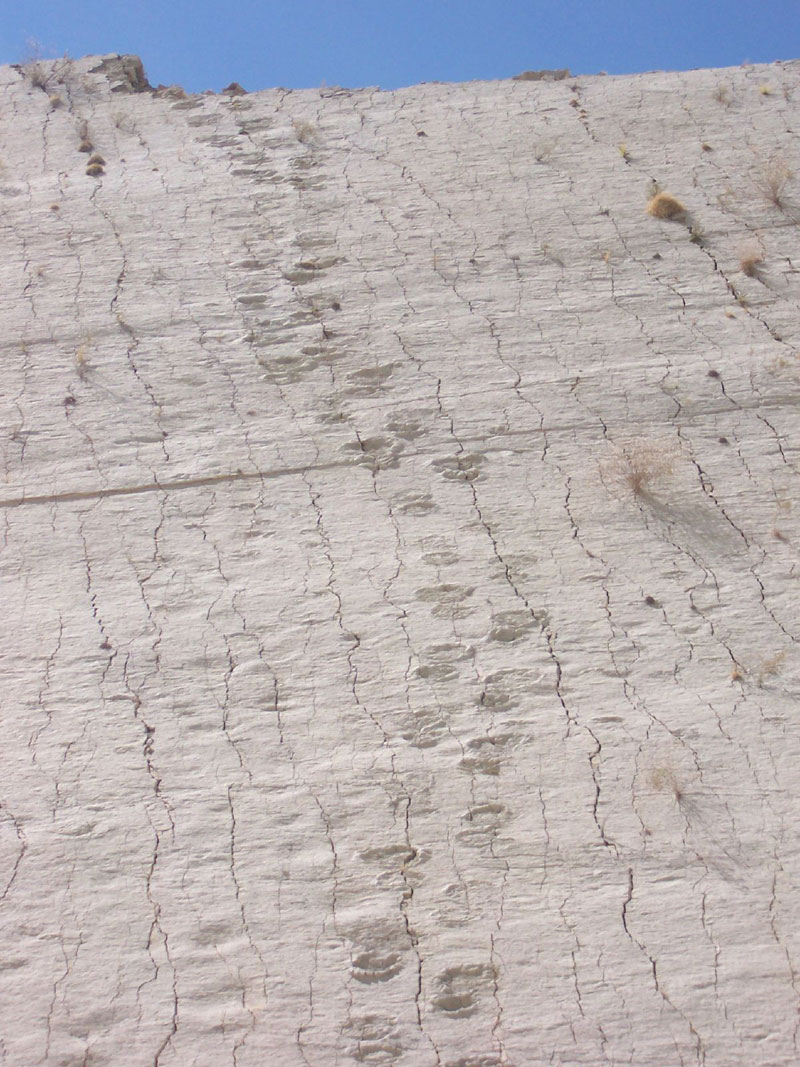 cal orko wall of dinosaur footprints sucre bolivia (7)