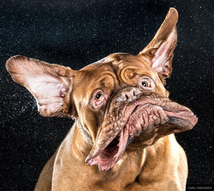 dogs mid shake by carli davidson (4)