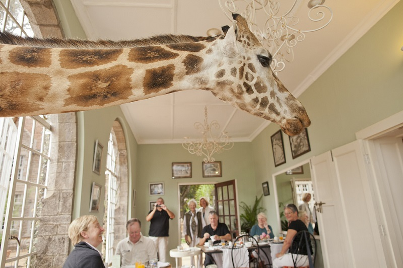 giraffe manor hotel nairobi kenya africa safari 4 You Can Now Stay at an Underwater Hotel Room and Sleep with the Fishes