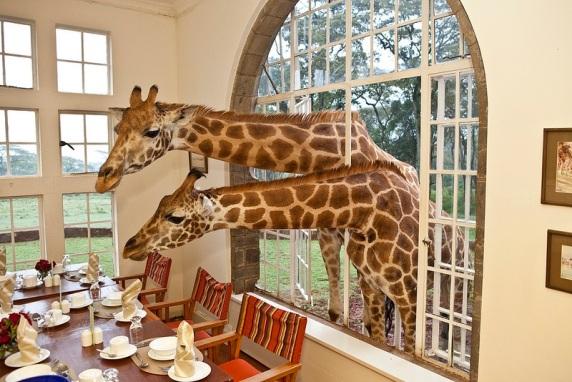 رحلات السفاري الكلاسيكية في كينيا