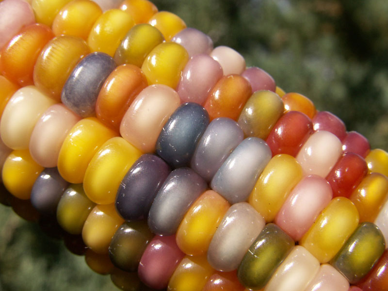 glass gem corn rainbow colored (10)