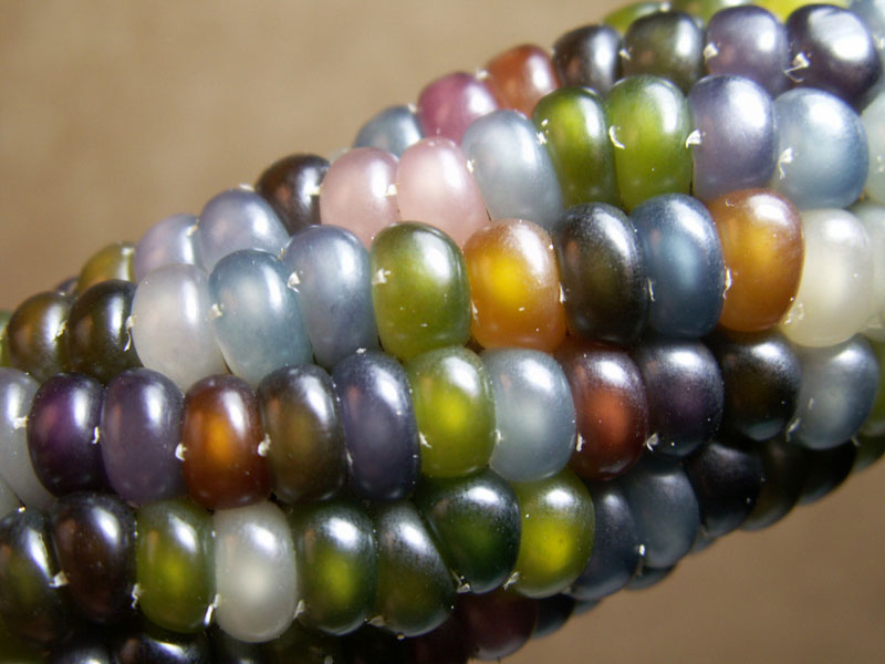 glass gem corn rainbow colored (5)