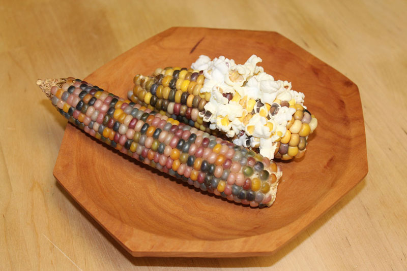 This Is Glass Gem Corn It S Real And Looks Amazing Twistedsifter