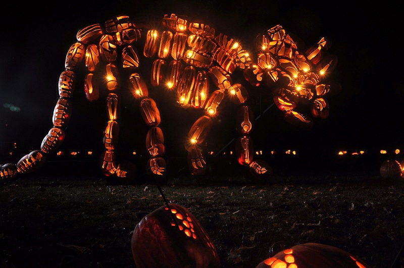 Picture of the Day: Jack O'Lantern Triceratops