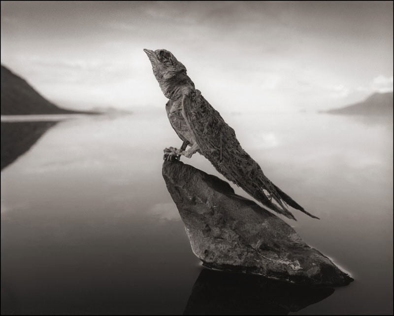 nick brandt across the ravaged land book (1)