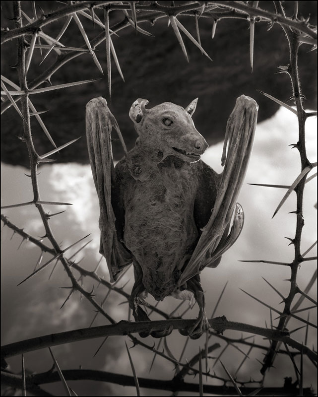 nick brandt across the ravaged land book (2)
