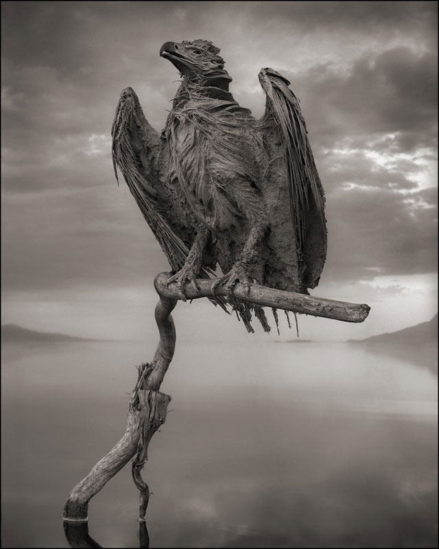 nick brandt across the ravaged land book (3)