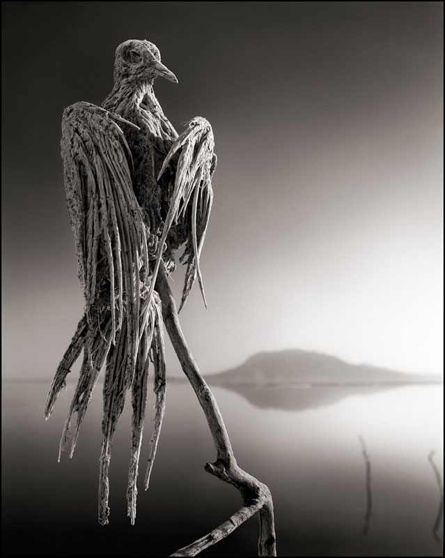 nick brandt across the ravaged land book (4)