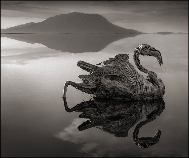 nick brandt across the ravaged land book (5)