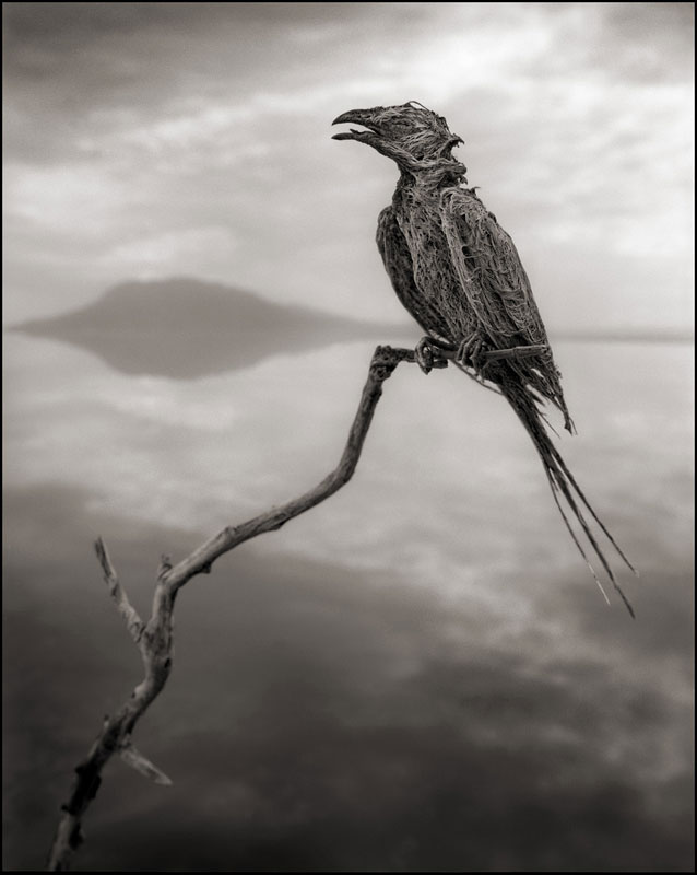 nick brandt across the ravaged land book (6)