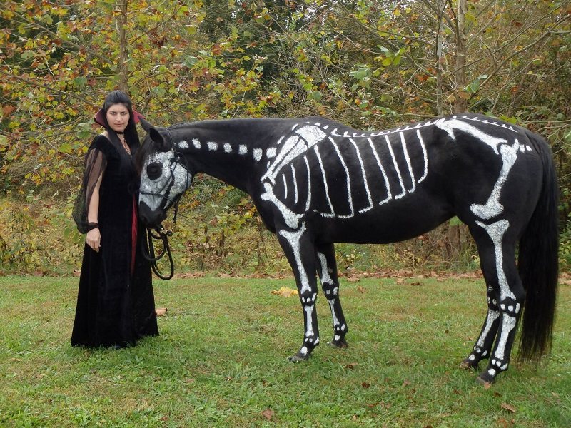 skeleton painted horse halloween (1)
