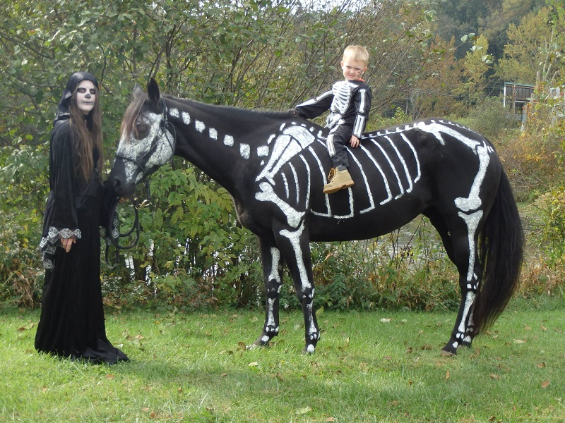 skeleton painted horse halloween (2)