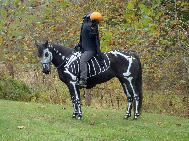 skeleton painted horse halloween (3)