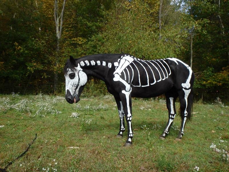 Skeleton Painted Horse Halloween 4