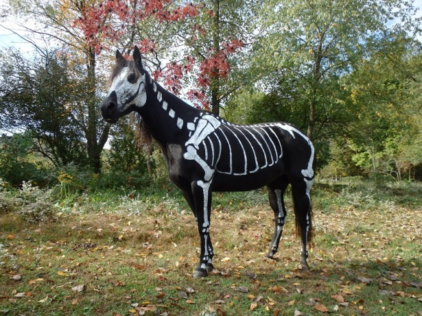 skeleton painted horse halloween (5)