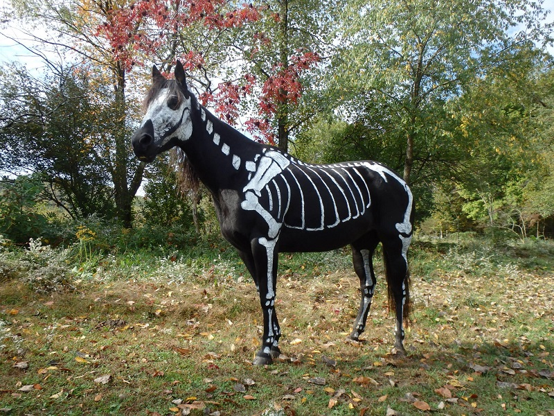 skeleton painted horse halloween 5 25 Awesome Costumes from Halloween 14