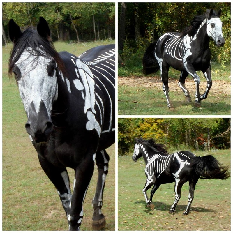 skeleton painted horse halloween (6)