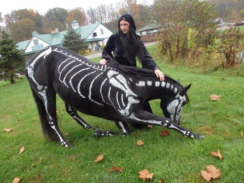 skeleton painted horse halloween (7)