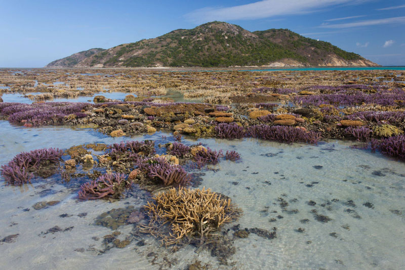 Picture of the Day: Coral Garden at LowTide
