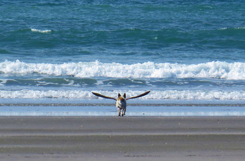 Picture of the Day: Perfectly Timed Dogbird