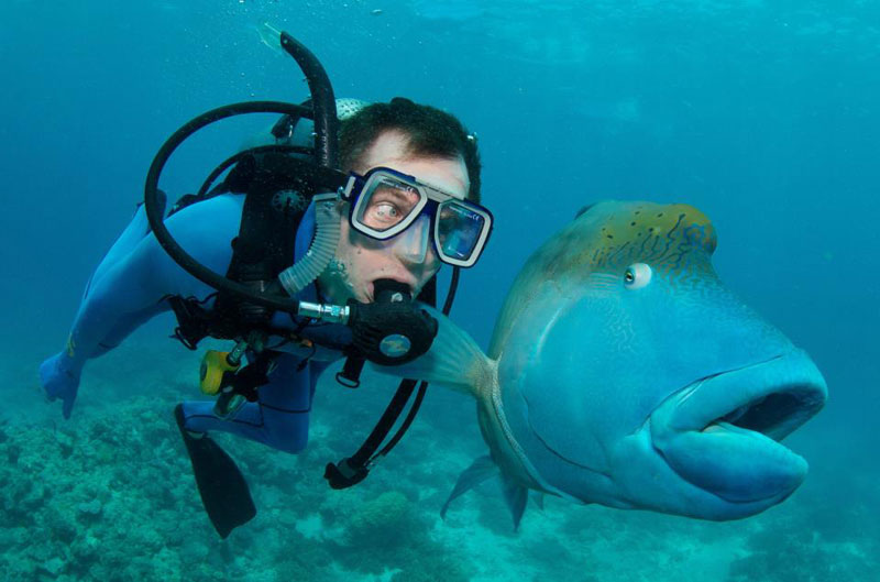 fish and scuba diver funny priceless expression Picture of the Day: This Fishs Face is Priceless